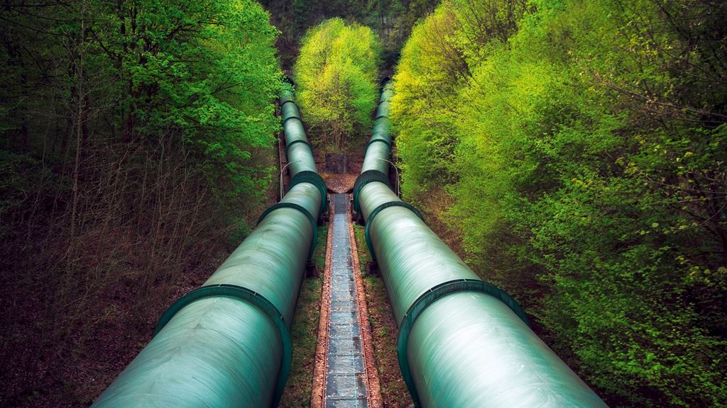 Pipelines through forest